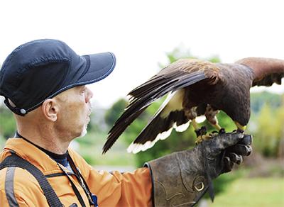 世界鷹狩りの日イベント