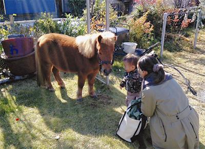 馬と触れ合い体験