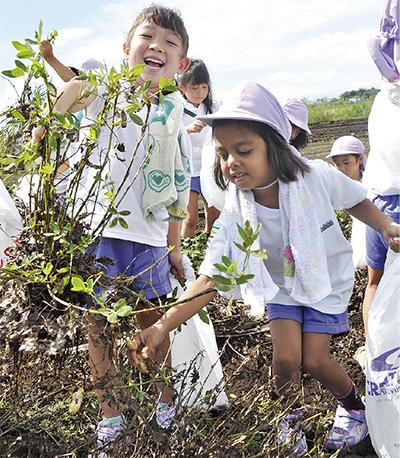 園児招き収穫体験