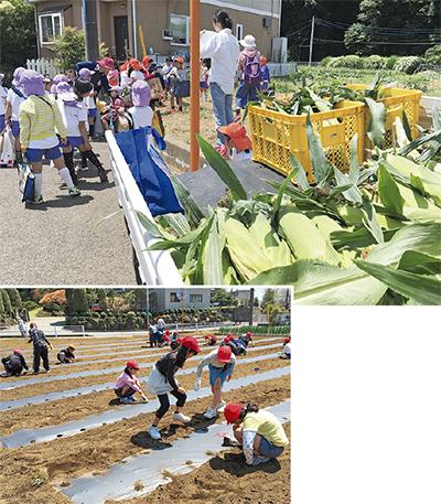 荷台いっぱいトウモロコシ