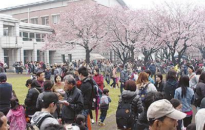 催し満載の桜まつり