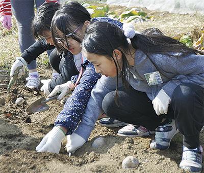 土に触れ農業体験