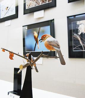 写真に合わせて展示された鳥の木彫り作品