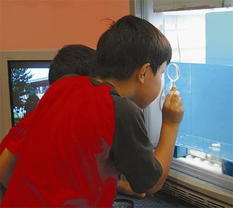 真剣にクリオネを観察する子どもたち