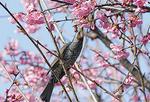 鳥の一瞬をキャッチ