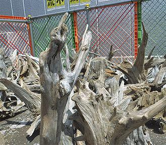 大きさ形も様ざまの流木