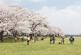 多くの人が訪れた坂本青少年広場(4月2日撮影)