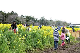 一面に広がる黄色い花畑に多くの人が集まった