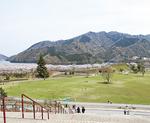 桜と湖畔園地