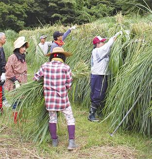 手作業で束ねた茅を吊るす参加者たち