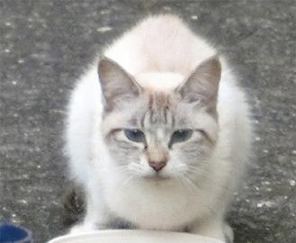 庭に居ついている猫