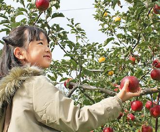 リンゴ狩りを楽しんだ