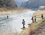 中津川の人気ポイント・通称「交番下」はフライ愛好家が多く見られた