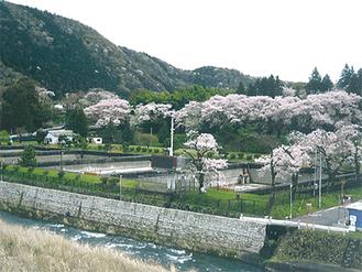 昨年の横須賀水源地跡地の桜の様子