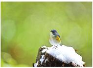 「鳥のいる風景」展