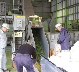 続々と機械に運ばれる生茶葉