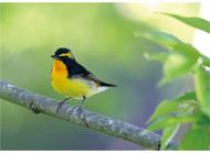 身近な野鳥の世界