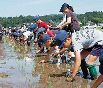 横に並んで苗を植える児童たち