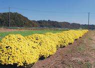 仙台下に秋の色