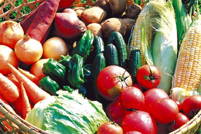 野菜料理を大募集