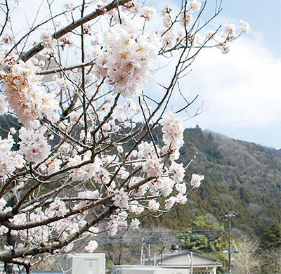 春めき真っ盛り