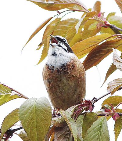 身近にいる野鳥の写真展