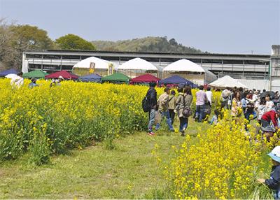 春爛漫 菜の花祭り