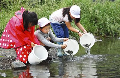 中津川に鮎を放流