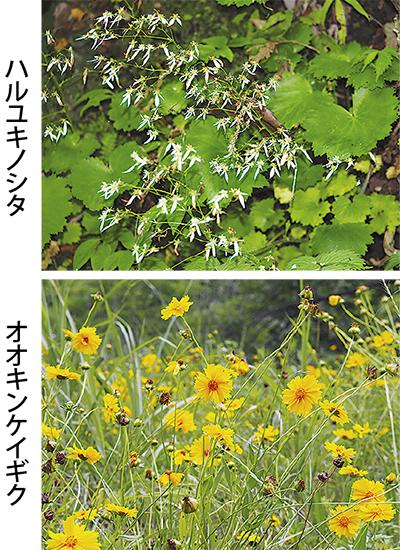 愛川 最近の植物事情