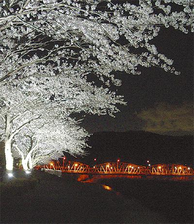 今年も夜桜ライトップ