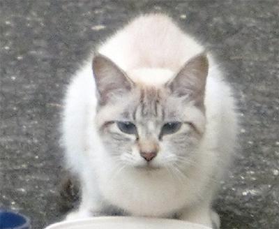 煤ヶ谷に迷い猫