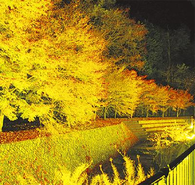 紅葉をライトアップ