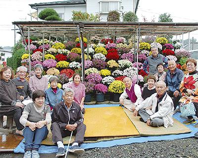 愛川に菊花の賑わい