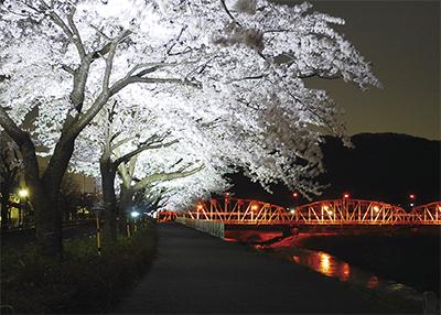 桜と夜景の共演