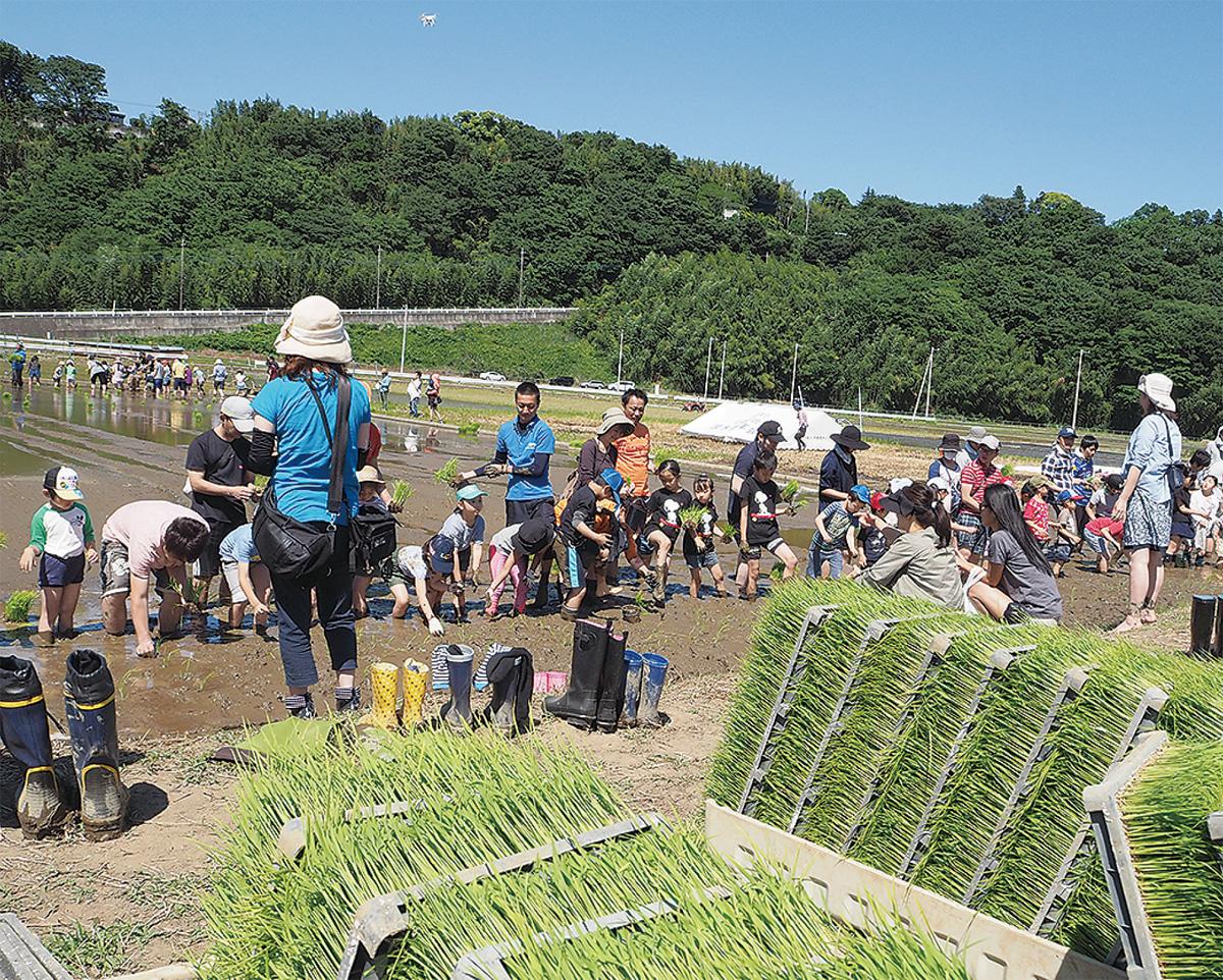 稲作体験で郷土愛育む