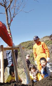 桜の苗木を植樹する園児ら