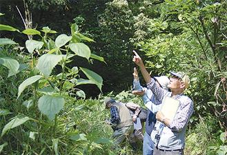 長坂の市民緑地は自然観察などで活用していく(=先月25日、里山びらき)