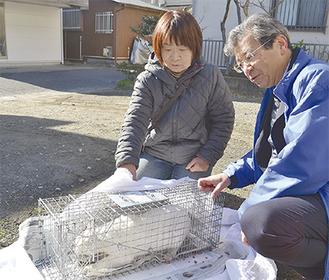 不妊手術を行うために野良猫を捕獲