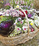 不要な植物や鉢を募集