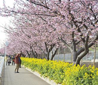 桃色に染まる小松ヶ池周辺(写真は過去のもの)