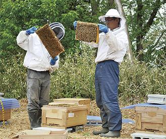 巣箱を空けてミツバチの生育状況や蜜の量を確認