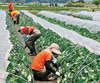 この日は除草や摘果メロンの収穫など。メンバー揃いのポロシャツで作業