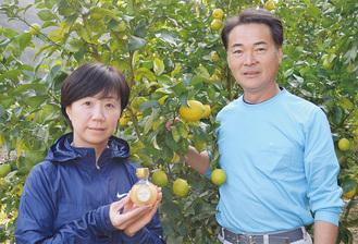 収穫時期を迎えているレモンと若命夫妻
