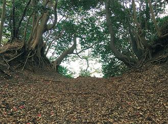 浦賀城の堀切