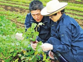 農業を通じて障がいを持つ人(社員)の人間的な成長と自立を促す。指導スタッフがこれを支えている