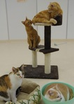 自然体に戯れる猫たち