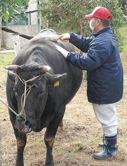 牛の世話をする生徒(写真提供/三浦初声高校)