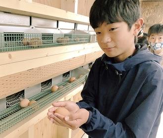 鶏舎の中に潜入。温もりのある産み立て卵を手に