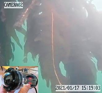 海中にカメラを設置して海藻の様子を映し出す