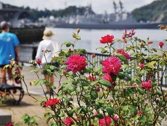 艦船をバックに鮮やかな花を咲かせる=9月11日撮影